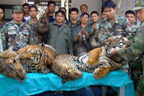 thai_animals_0208