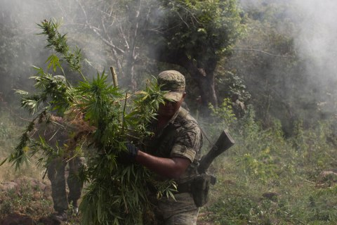 image: Soldiers uproot marijuana plants to be burned at a plantation found during a reconnaissance mission near the town of Lombardia in Michoacan state, Mexico, Oct. 25, 2012.