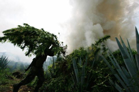 A soldier throws a bundle of marijuana into a bonfire during a military operation at Tequila in Jalisco