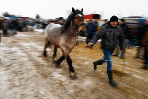 A breeder presents his horse at Skaryszew horse fair.