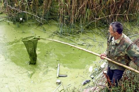 China pollution clickthru - Tai Lake