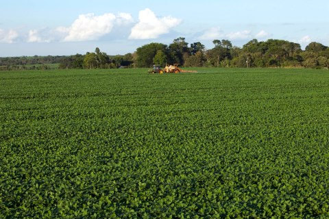 Soybean fields outside of Campo Nueve, Paraguay, on Dec. 17, 2010.