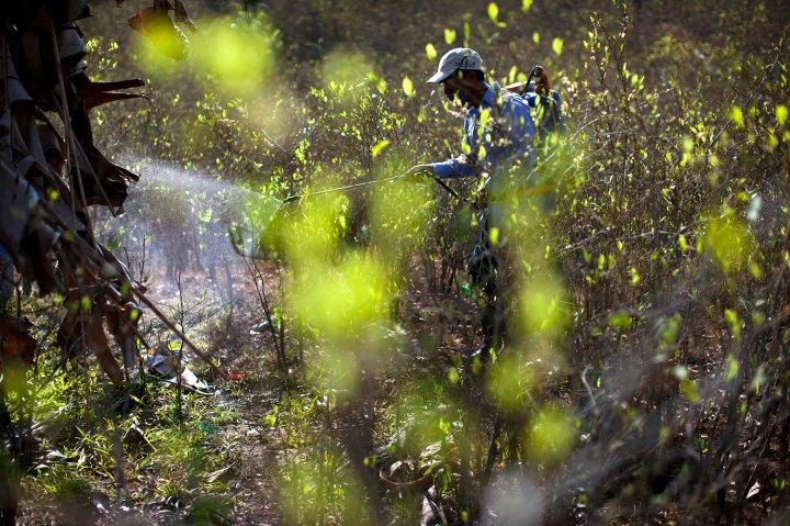Peru Coca Growing Valley