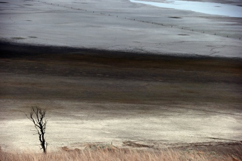 A dead tree stands in front of shallow water and a dried-up area of Lake George, located 50 km (31 miles) north of the Australian capital city of Canberra