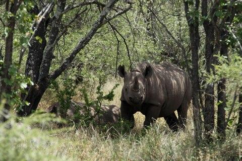 Zimbabwe Rhino Poaching